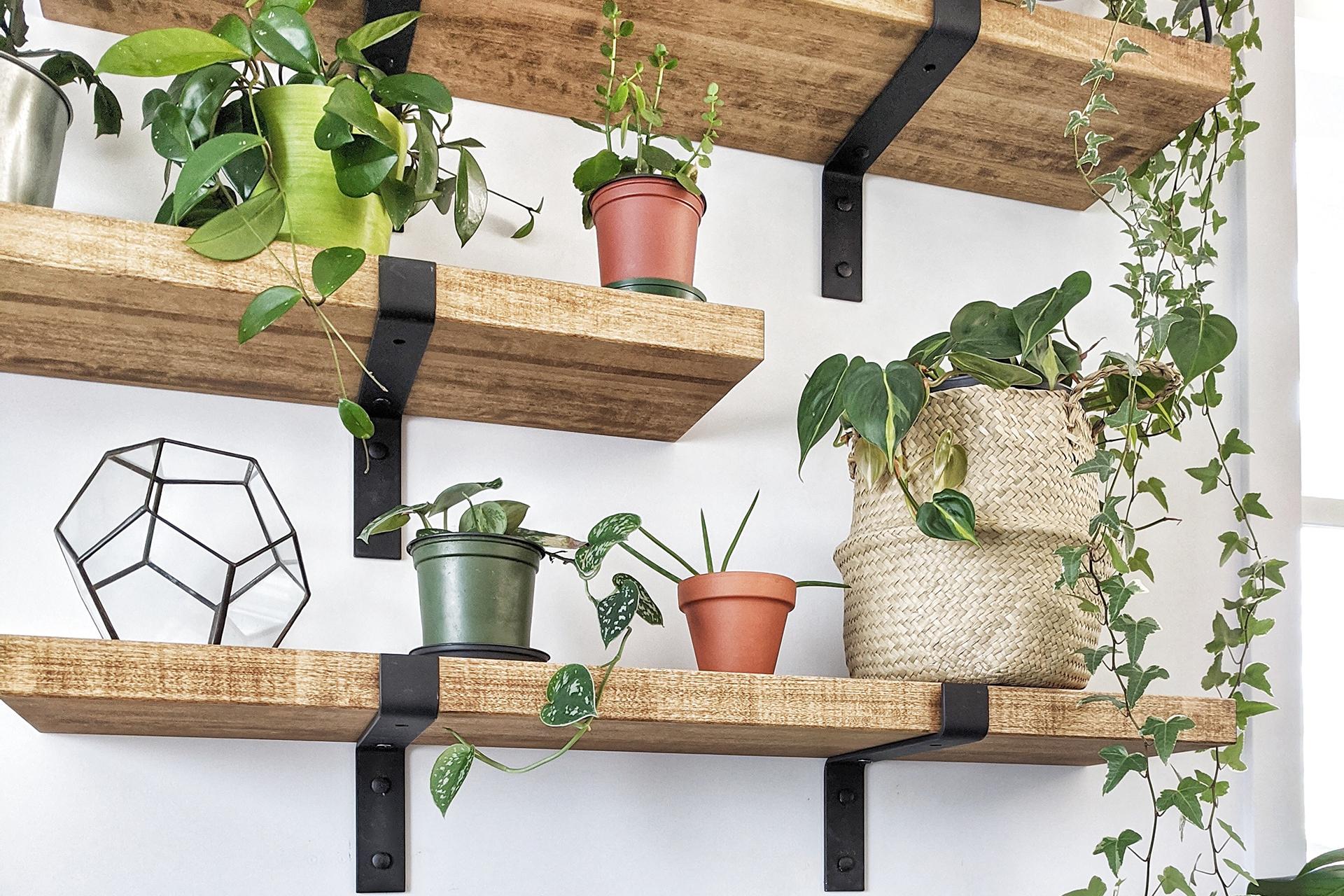 top indoor plant tips